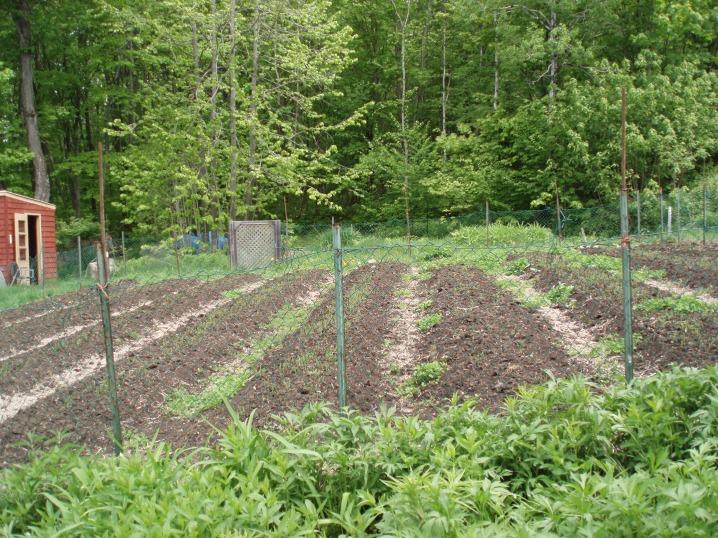 very fertile, healthy soil