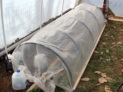 row-cover-in-greenhouse-1