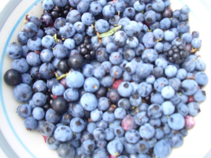 blueberries+blackberries+raspberries=amys breakfast